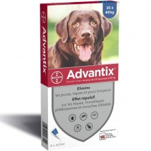 Casapets-Bayer-advantix-grand-chien