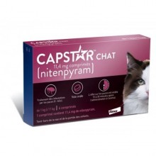 Casapets-Elanco-capstar-chat