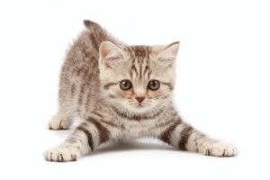 kitten-therapy-casapets